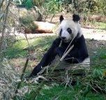 panda-chapultepec